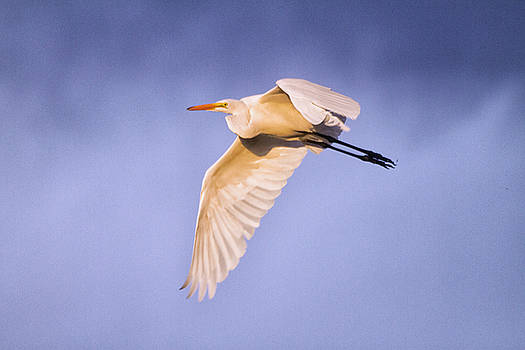 Cloudy day Egret by Ruth Jolly