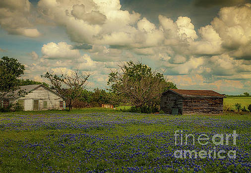 Cloudy Day in the Field by Iris Greenwell