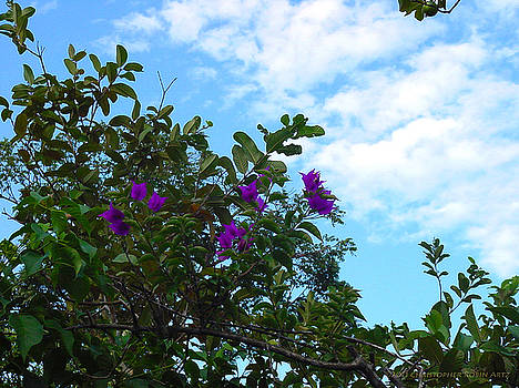 Cloudy Skies and Purple Blossoms by Christopher Robin