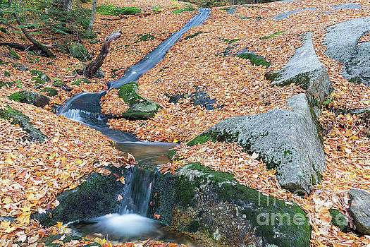 Clough Mine Brook - Woodstcok New Hampshire by Erin Paul Donovan