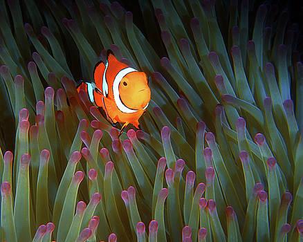 Pauline Walsh Jacobson - Clownfish in Anemone, Great Barrier Reef 4