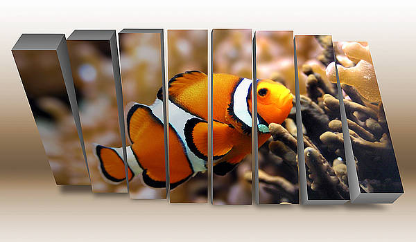 Clownfish by Marvin Blaine