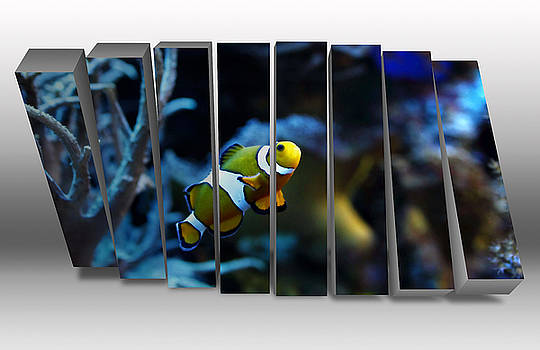 Clownfish Saltwater by Marvin Blaine