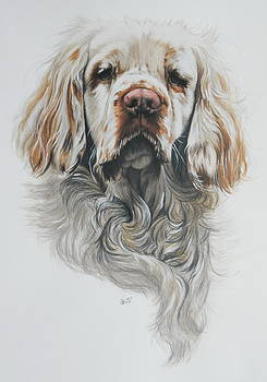 Clumber Spaniel by Barbara Keith