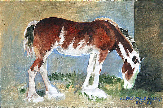 Clydesdale Colt PAD by Eileen Hale