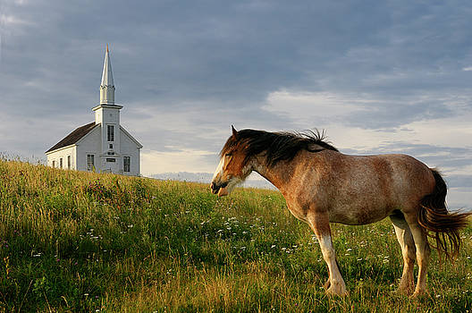 Reimar Gaertner - Clydesdale horse standing in field with church at Highland Villa