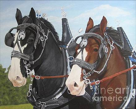 Clydesdale by Sid Ball