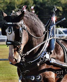 Sandra  Huston - Clydesdale Draft Horse