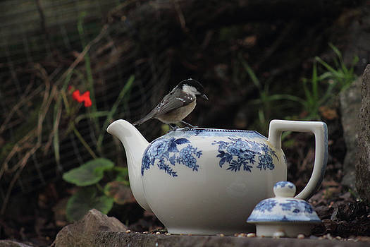 Coal Tit and China Teapot by Suesy Fulton