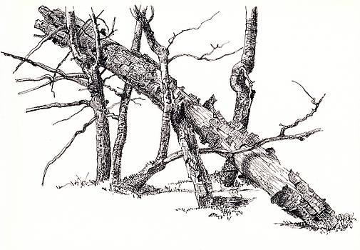 Martin Stankewitz - coarse woody debris,tree drawing
