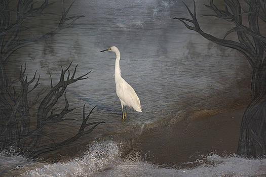 Coastal Birds by Athala Carole Bruckner