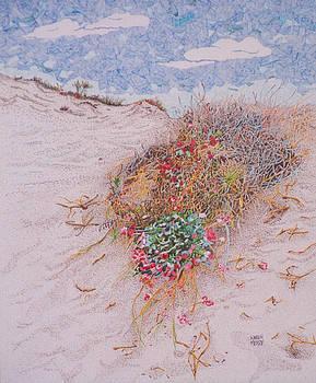 Coastal Buckwheat by Karen Merry