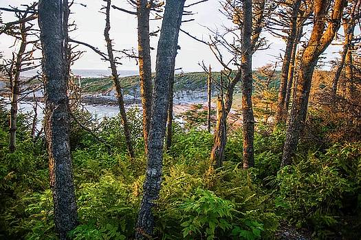 Coastal Forest at Sunset by Tom Hamilton