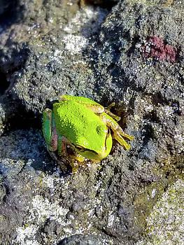 Coastal Frog by David Millenheft