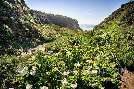 Coastal Lilies by George Oze