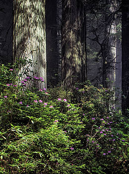 Jan Hagan - Coastal Redwoods with pink blooms