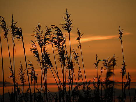Coastal Sunset by Donald Cameron