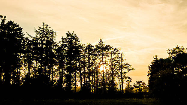 Coastal Trees by Pacific Northwest Imagery