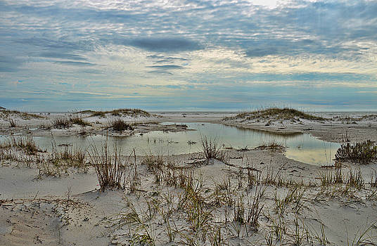 Coastland Wetland by Renee Hardison