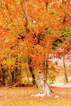 Coat of Many Colors - Fall Foliage by Barry Jones