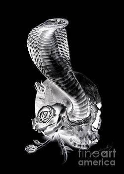 Cobra 1 by Miro Gradinscak
