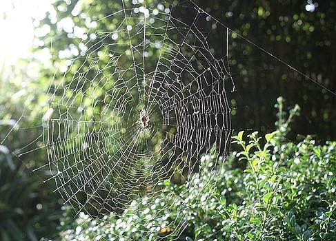 Cobweb by Julia Woodman
