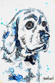 Cocker Spaniel in Blue by Shaina Stinard