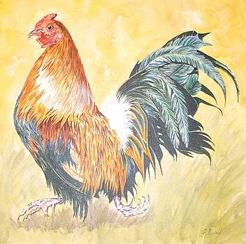 Cockerel by Frances Evans