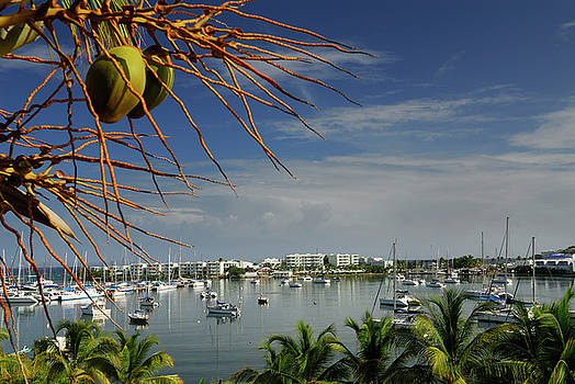 Reimar Gaertner - Coconut fruit over Oyster Pond Marina in St Maarten