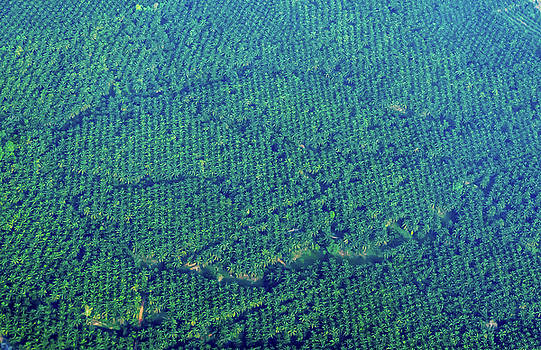 Randy Straka - Coconut Groves From Above, Thailand