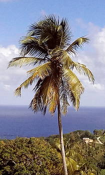 Coconut Ocean view1 by William James