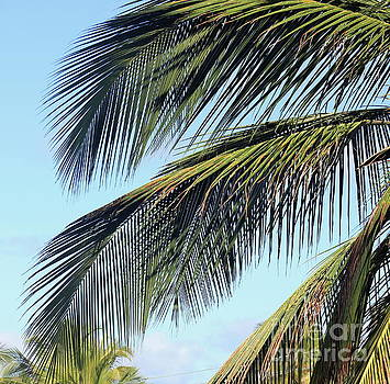 Swaying Palm Branches by The Art of Alice Terrill