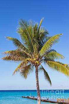 Coconut Palm Tree by Diane Macdonald