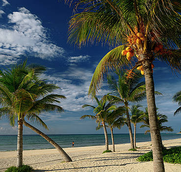 Reimar Gaertner - Coconut palm trees on the Mayan Riviera beach with a lone jogger