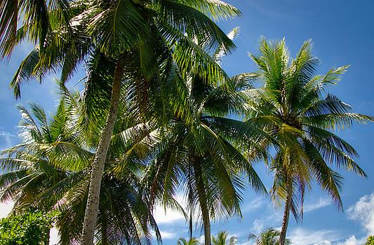 Coconut Palms by Byron Fair