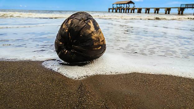 Scott Harris - Coconut Surf