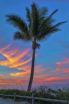 Coconut Tree by Juergen Roth