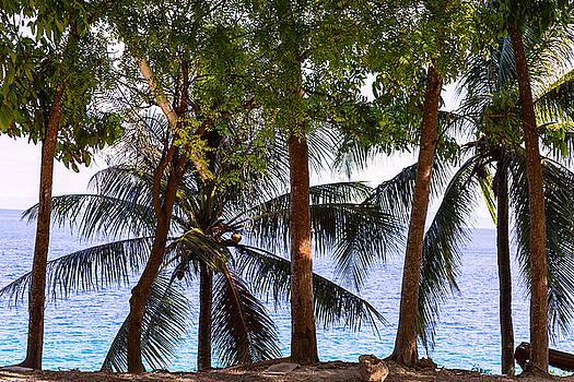 James BO Insogna - Coconut Trees Ocean Scenic View