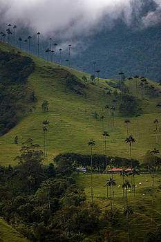 Cocora Valley Colombia by Adam Rainoff
