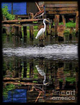 Coexistence In Bocas Del Toro, Panama II by Al Bourassa