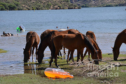 Heather Kirk - Coexistence Salt River Wild Horses Tonto National Forest Number Four Rafting Horizontal