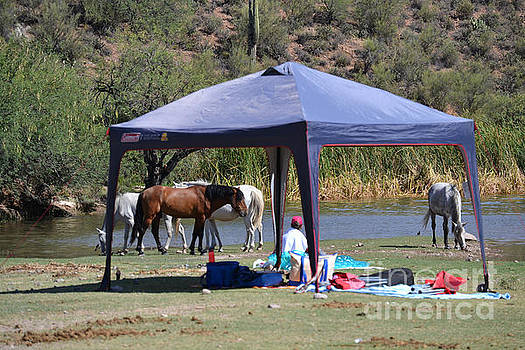 Heather Kirk - Coexistence Salt River Wild Horses Tonto National Forest Number Three Tent