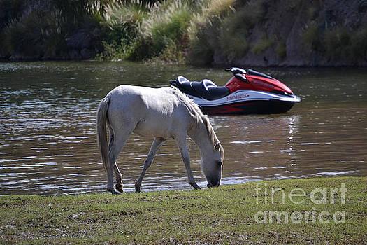 Heather Kirk - Coexistence Salt River Wild Horses Tonto National Forest Number Two Jet Ski