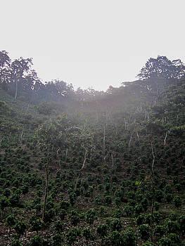 Ernesto - Coffee Farm Mountainside