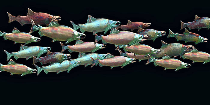 Coho Migration by Jeff Burgess