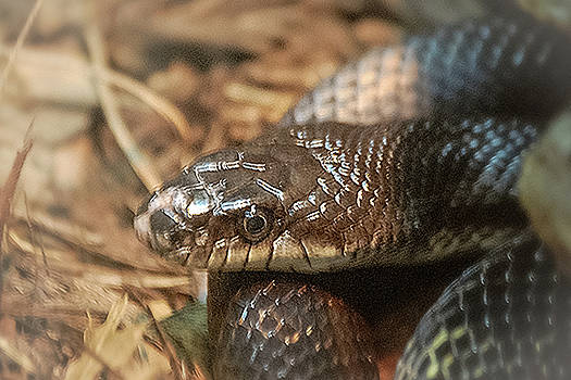 Coiled by Scott Staley