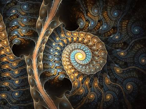 Coiled Spirals by Amorina Ashton
