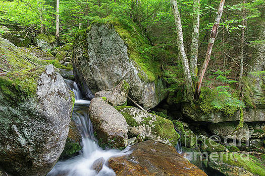 Cold Brook - White Mountain National Forest by Erin Paul Donovan