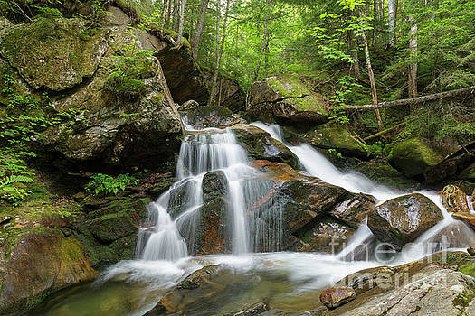Cold Brook - White Mountains New Hampshire by Erin Paul Donovan