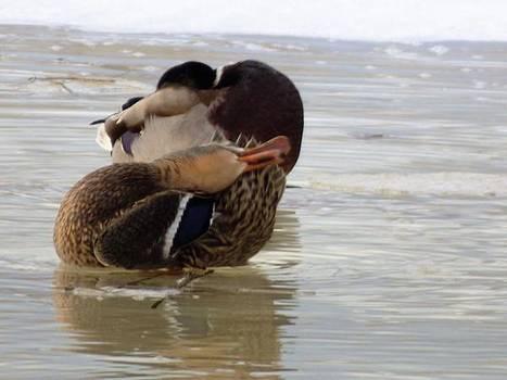Cold day swim by Scott Welton
